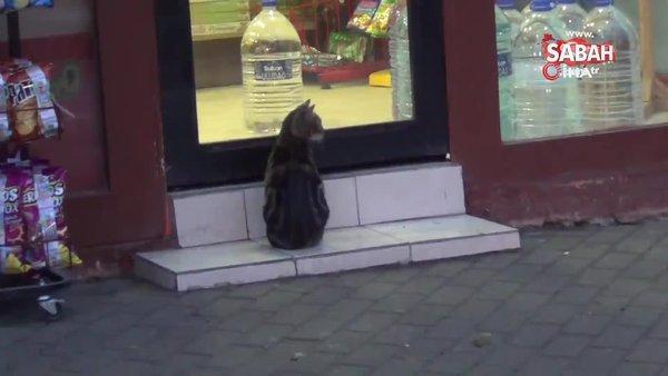 Soğuk havada yürek ısıtan görüntü. Marketin önünde bekleyen kediye süt getirdi | Video