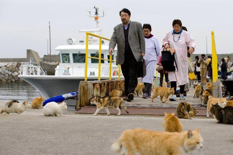 Kediler adayı işgal etti