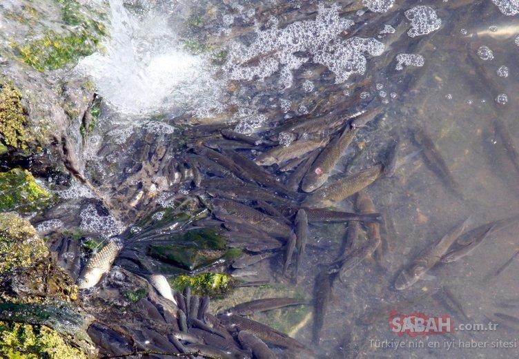 Şeytan Deresi'nde binlerce balık öldü