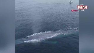 ABD'de okyanus kıyısında balıkçıları korkutan dev mavi balina kamerada   Video