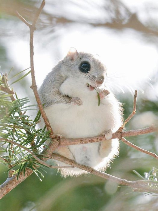Japonya'nın sevimli canlıları