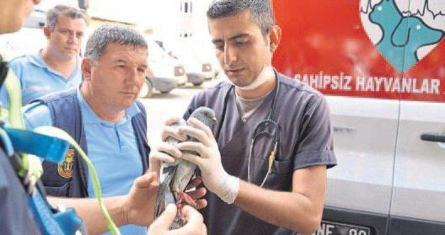 Mersin itfaiyesinden güvercin operasyonu