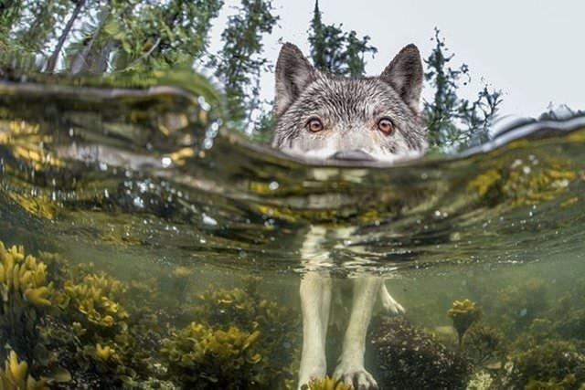 National Geographic en iyileri seçti