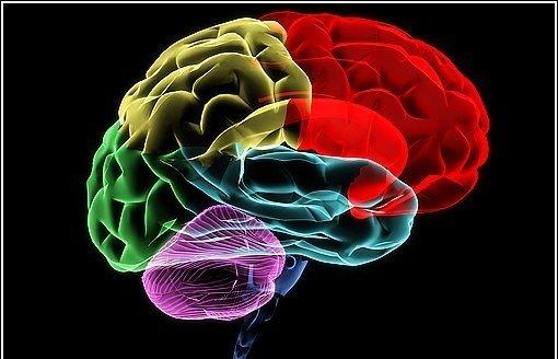 Sırlarla Dolu Beyin Hakkında Bilinmesi Gereken 24 Şaşırtıcı Gerçek
