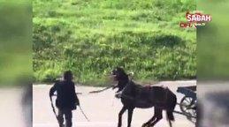Son dakika! Bursa'da tepki çeken görüntü! Atını, çocukların 'Canı çok acıyor' çığlıklarına rağmen kırbaçla böyle dövdü | Video