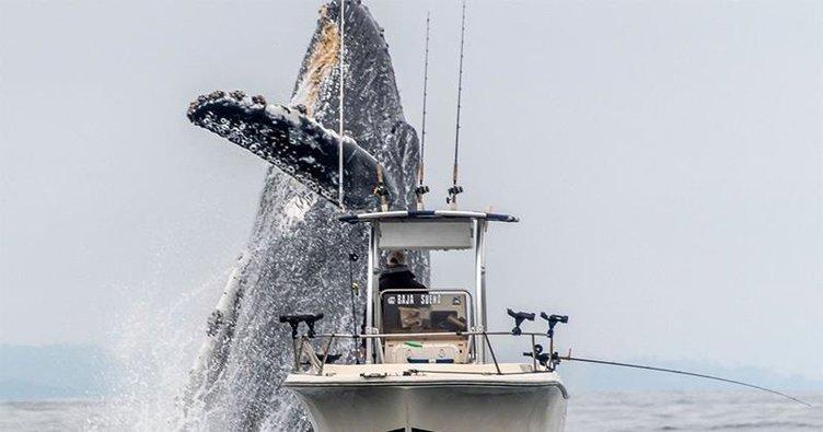 Kambur balina şov yaptı