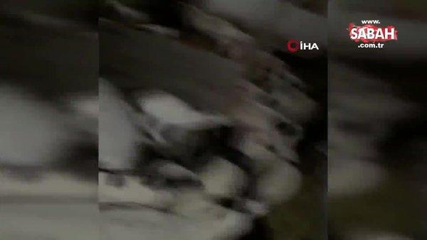 Manisa'da 5.2'lik depremi önceden haber veren koyunların görüntüleri şoke etti | Video