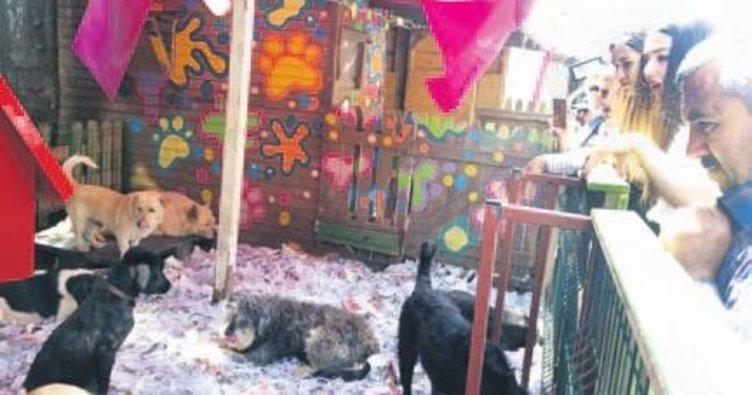 Yedikule Hayvan Barınağı'nda 'Sevgi Günü'