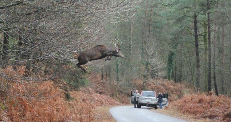Vahşi Doğa'dan inanılmaz görüntüler