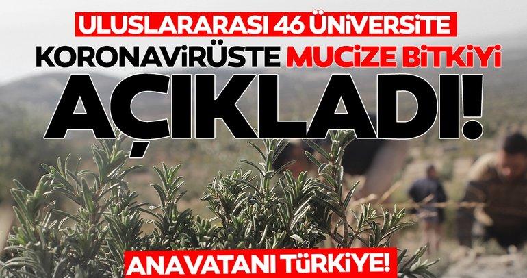 SON DAKİKA: Dünya bunu konuşuyor! Corona virüsü bitiren mucize bitki açıklandı! Anavatanı Türkiye...
