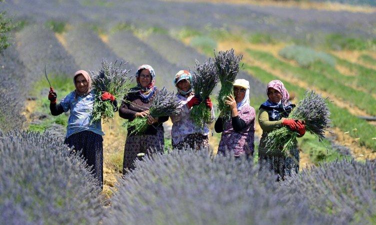 Türkiye'nin en büyük adası lavanta kokacak