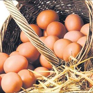 Avrupa'ya 6 yıl sonra yumurta ihracatı