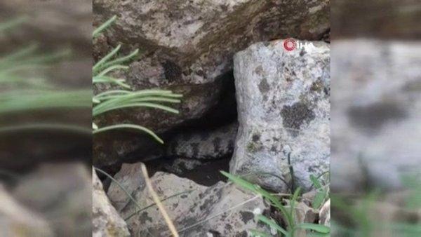 Siirt'te köylüleri korkutan dev yılan kamerada