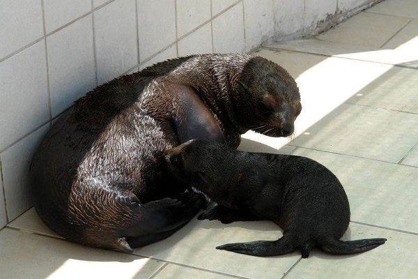 Türkiye'nin ilk yavru foku