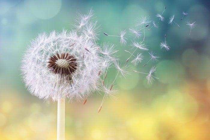 polen alerjisi ile ilgili görsel sonucu