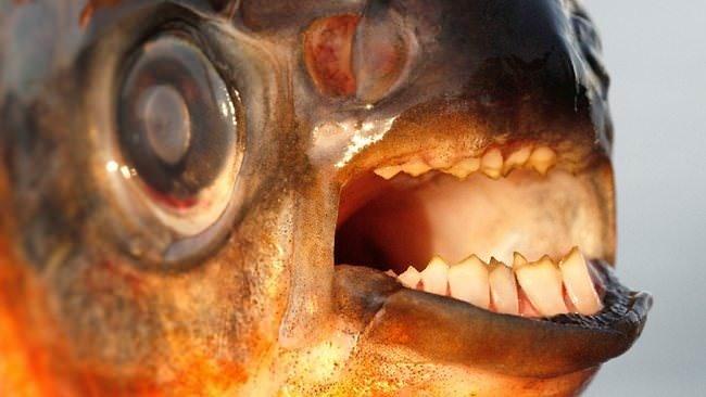 Erkekler bu balığa dikkat