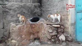 Diyarbakır'da 'Anne' diyen kedi görenleri hayretler içinde bıraktı | Video