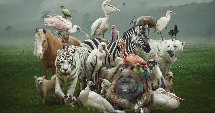 İngilizce hayvanlar ve adları - İngilizce hayvan isimleri yazılışı, okunuşu ve Türkçe anlamları