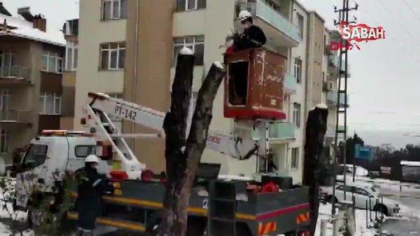 Sinop'ta elektrik tellerine takılan martı kurtarıldı | Video
