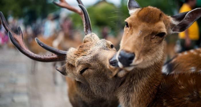 Bu kareler 'hayvanlar da sever' dedirtiyor!