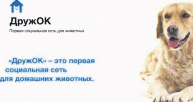 Rusya'da köpeklere Facebook kurdular
