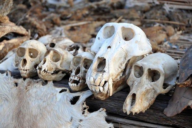 Şarlatanların 'iskelet pazarı' tehlikede