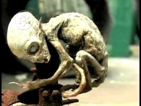 Dünyanın en korkunç ve esrarengiz 10 yaratığı