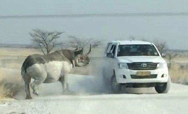 Hayvanların hışmına uğrayan insanlar!
