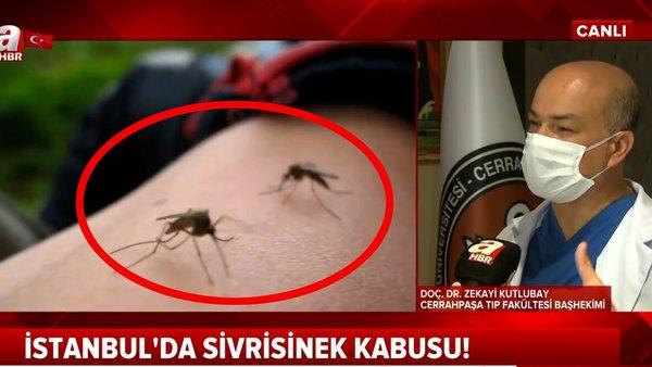 İstanbul'da sivrisinek kabusu... Bu kan grubunda olanlar dikkat! | Video