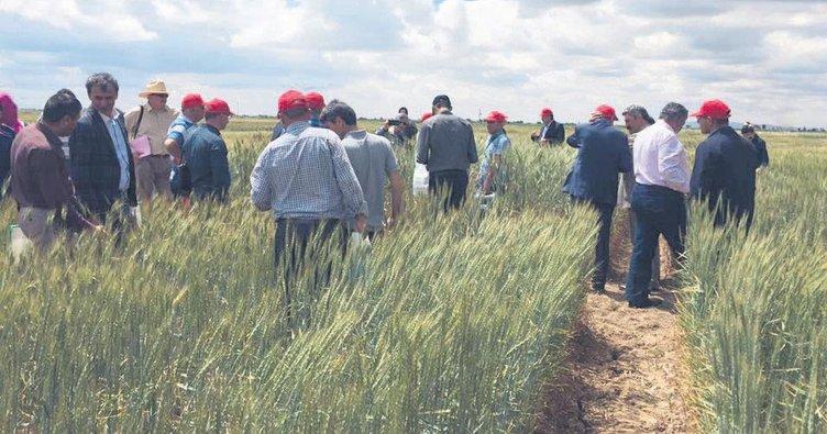 Kurak topraklara buğday