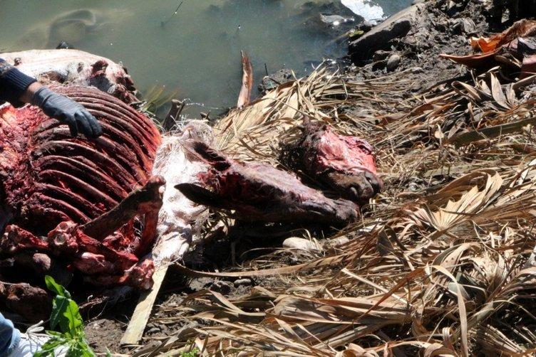 Kebap diyarı Adana'da iğrenç görüntü: At ve eşek kafası bulundu!
