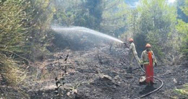Kumluca'da 3 hektar kül oldu
