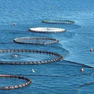 Türkiye dünyanın dörtte üçüne su ürünleri ihraç ediyor