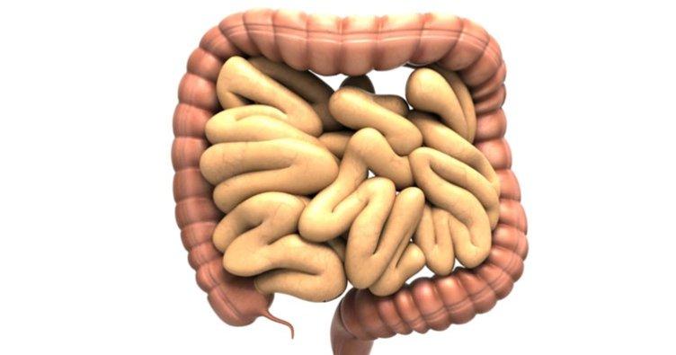 Bağırsak enfeksiyonu nedir? Belirtileri nelerdir?