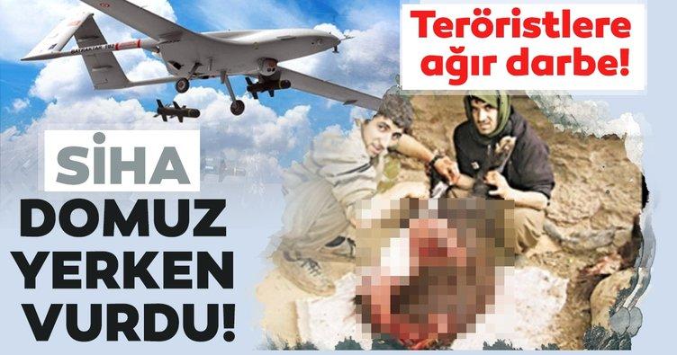SİHA teröristleri yaban domuzu yerken vurdu