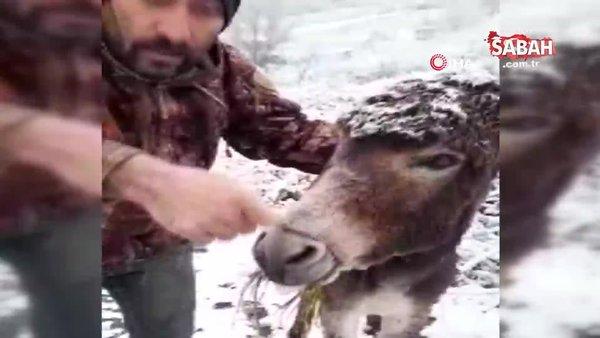 Samsun'da yürekleri burkan görüntü... Eşeğin ağzını telle bağlayıp kar altında ölüme terk ettiler | Video