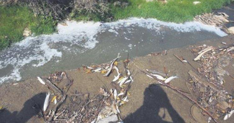 İnegöl'de toplu balık ölümlerine inceleme