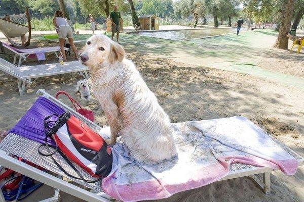 Köpeklerin plaj keyfi