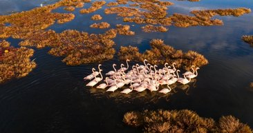 İzmir'de flamingolar