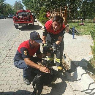 Mazgala sıkışan köpek ve yavrusunu itfaiye kurtardı