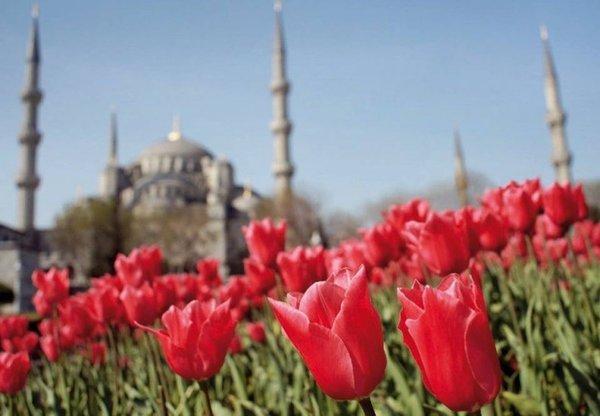 İstanbul'da lale devri!