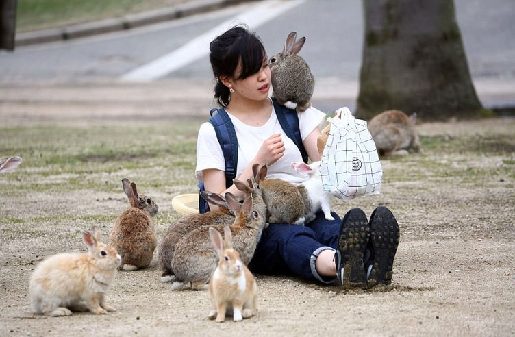 Japonya hakkında ilginç bilgiler