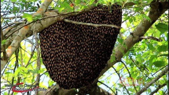 Arı kovanından balı böyle aldılar