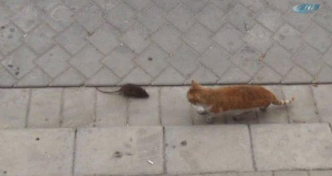 Fareden korkan kedi arkasına bakmadan kaçtı!