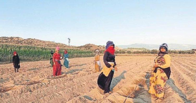 Mevsimlik işçilerin tarlada zorlu mesaisi