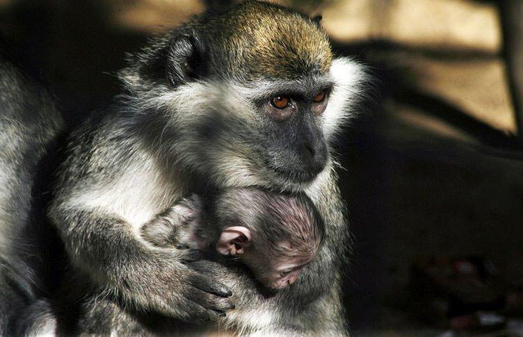 Gazze'deki hayvanat bahçesinde korkunç manzara