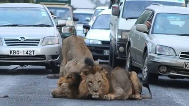 Trafikten şaşırtan görüntüler