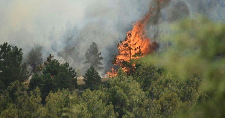 Son dakika... Konya'da ormanlık alanda yangın!