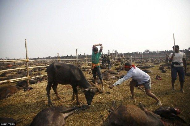 Nepal'de dehşete düşüren festival (+13)
