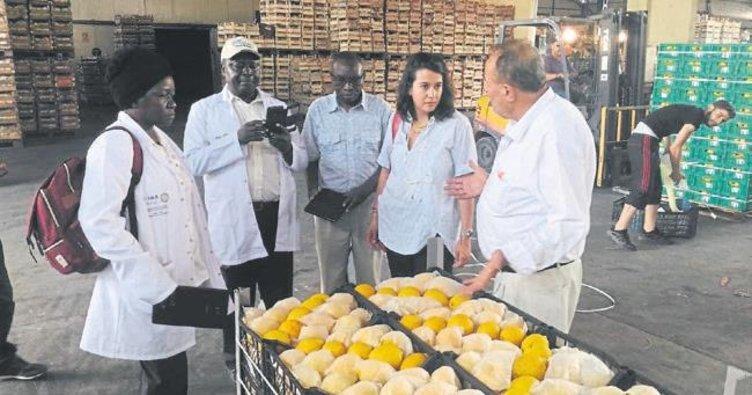 Kenyalı uzmanlara tarım eğitimi verildi